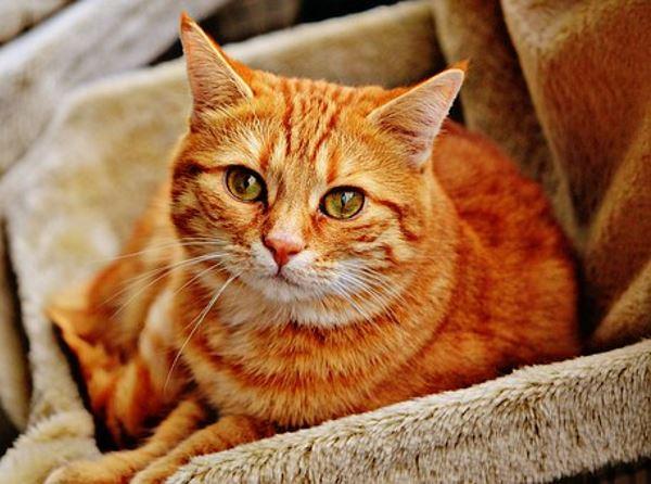 redcat_600